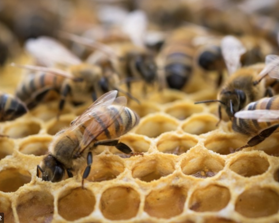 Advantages Of Hiring A Professional Bee Hive Removal Company